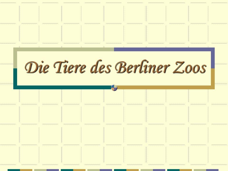 Die Tiere des Berliner Zoos