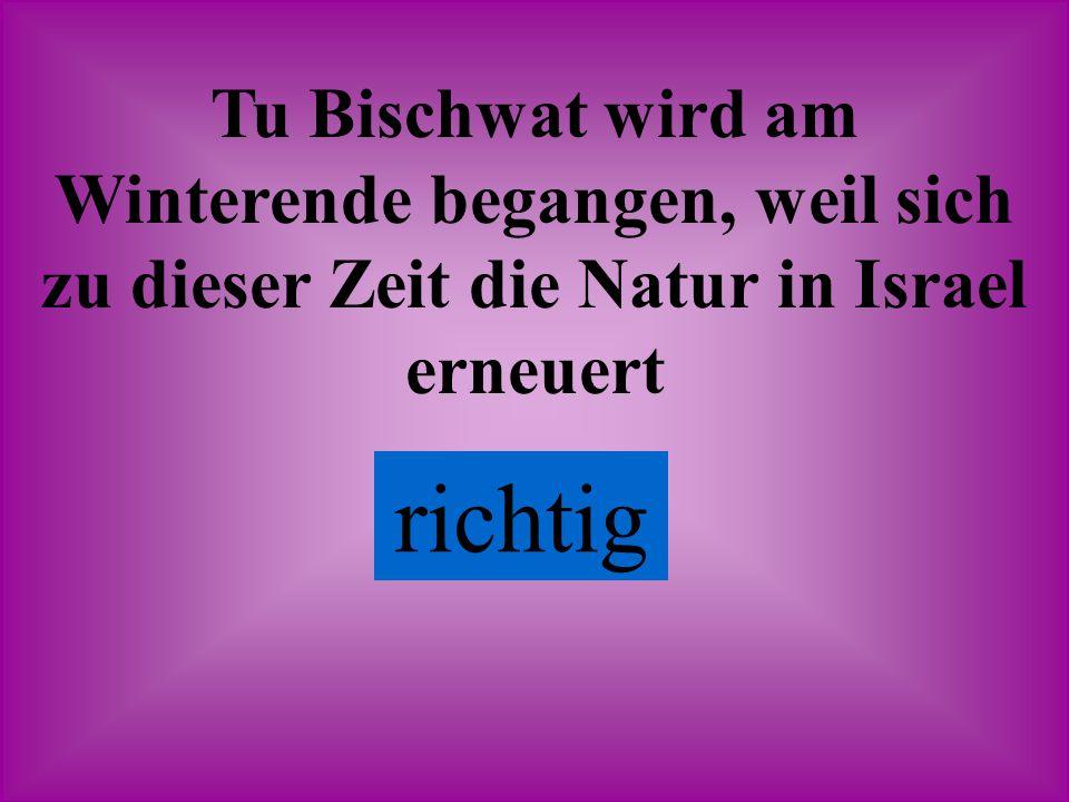 Tu Bischwat wird am Winterende begangen, weil sich zu dieser Zeit die Natur in Israel erneuert