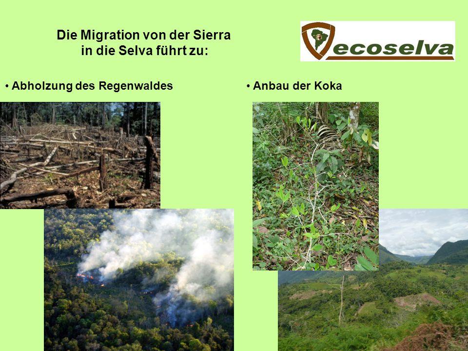 Die Migration von der Sierra