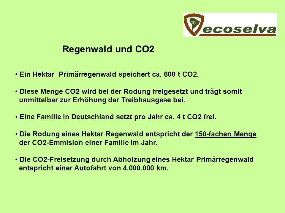 Regenwald und CO2 Ein Hektar Primärregenwald speichert ca. 600 t CO2.