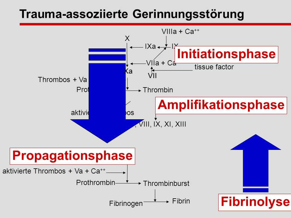 Initiationsphase Amplifikationsphase Propagationsphase Fibrinolyse