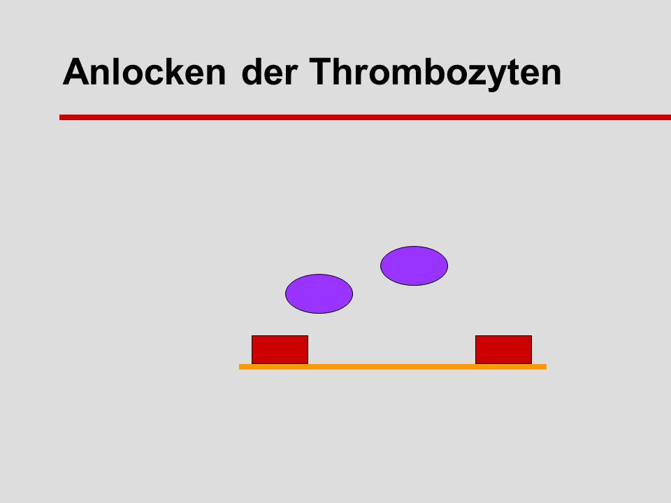 Anlocken der Thrombozyten