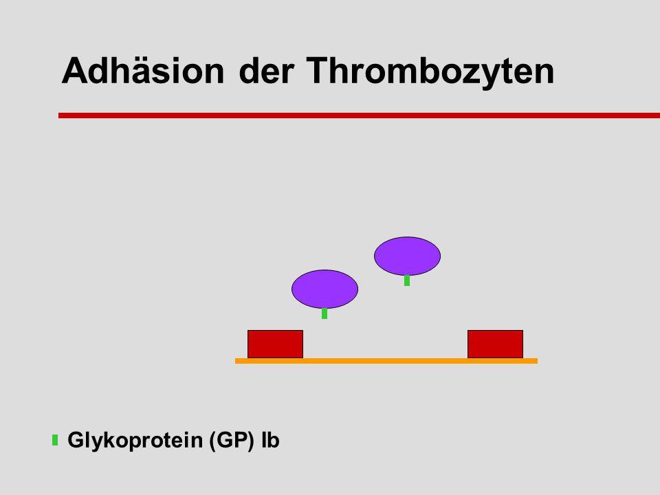 Adhäsion der Thrombozyten