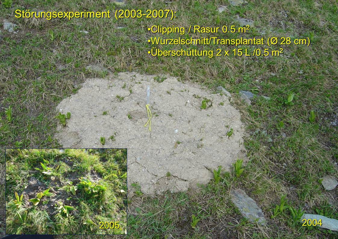 Störungsexperiment (2003-2007):