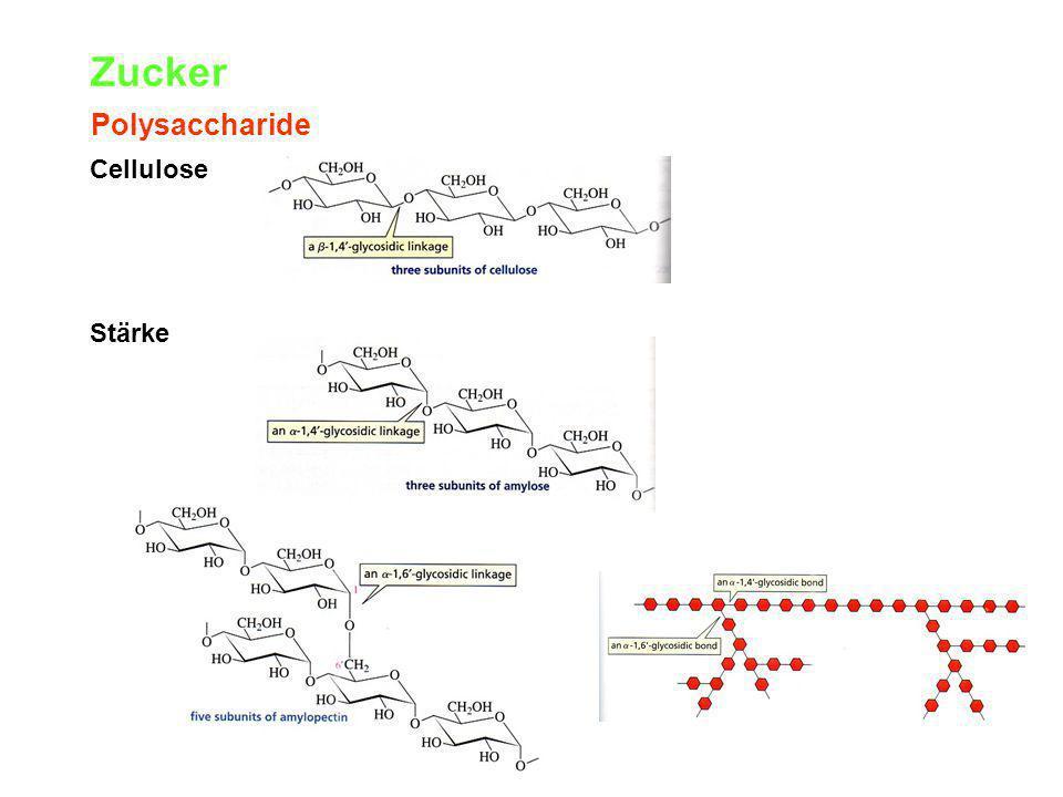 Zucker Polysaccharide Cellulose Stärke