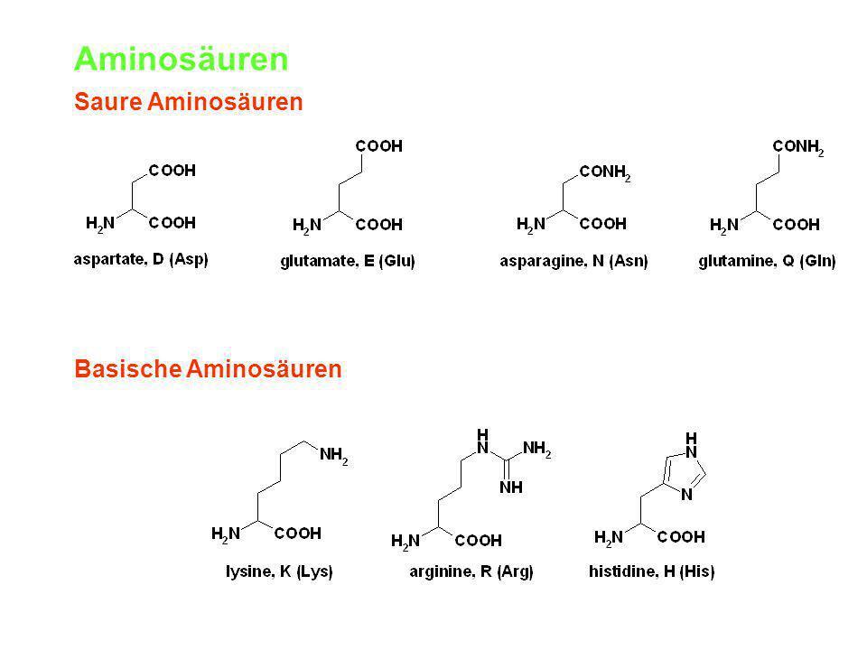 Aminosäuren Saure Aminosäuren Basische Aminosäuren