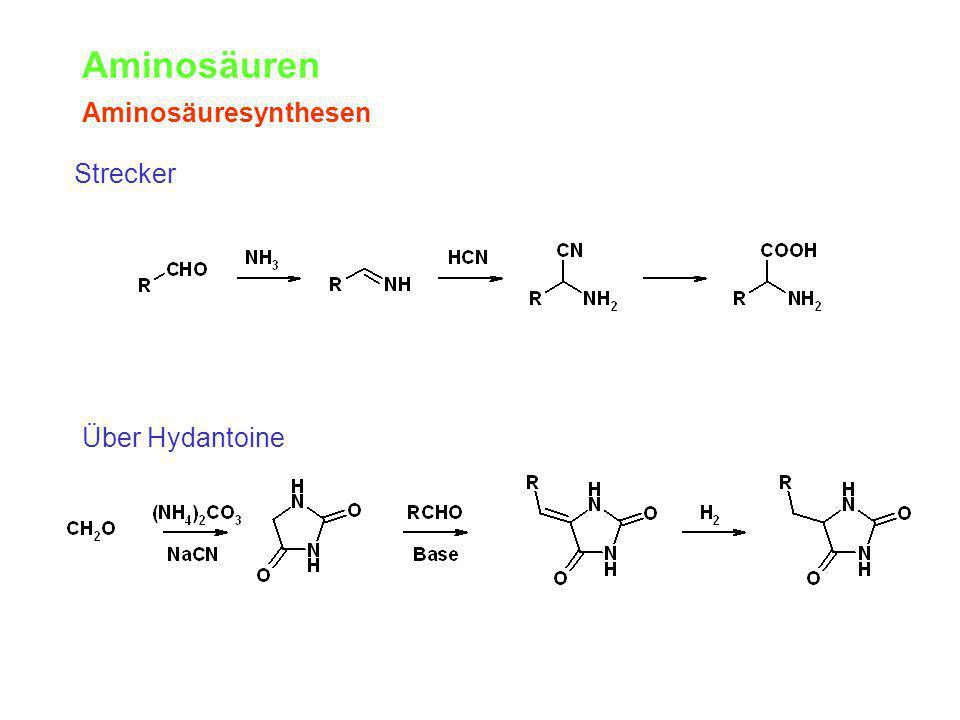 Aminosäuren Aminosäuresynthesen Strecker Über Hydantoine