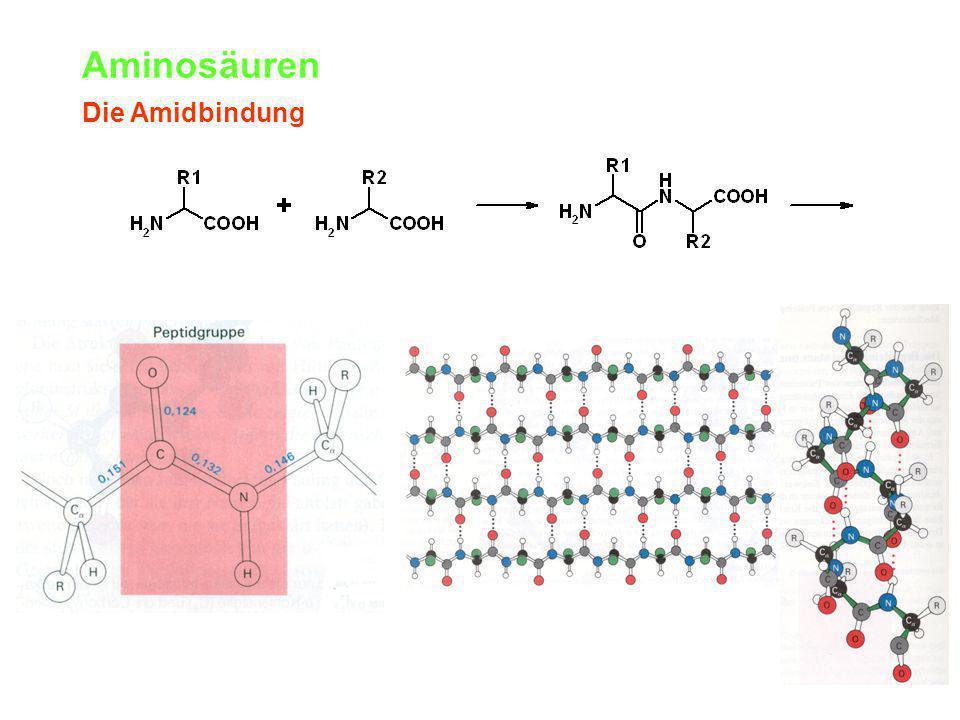 Aminosäuren Die Amidbindung