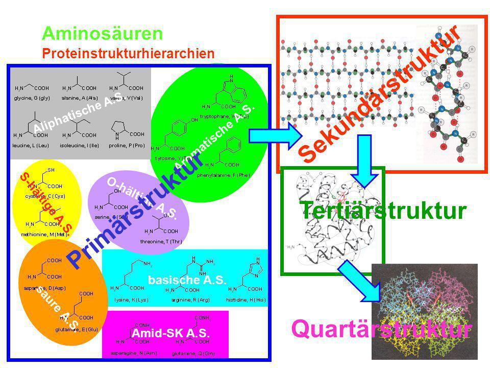 Sekundärstruktur Primärstruktur Tertiärstruktur Quartärstruktur