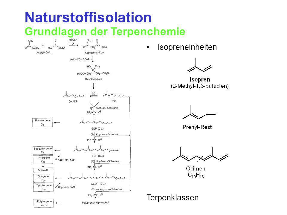 Naturstoffisolation Grundlagen der Terpenchemie Isopreneinheiten