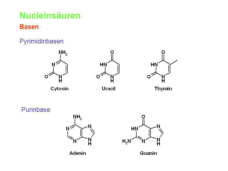 Nucleinsäuren Basen Pyrimidinbasen Purinbase