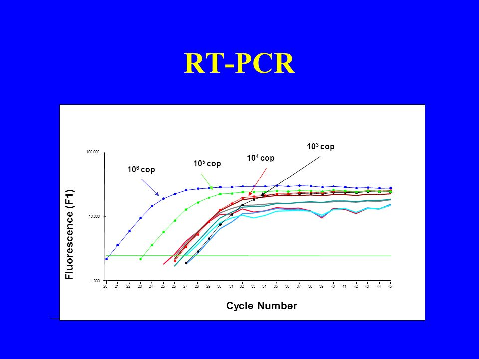 RT-PCR Fluorescence (F1) Cycle Number 103 cop 104 cop 105 cop 106 cop