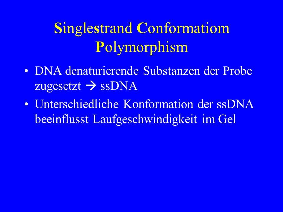 Singlestrand Conformatiom Polymorphism