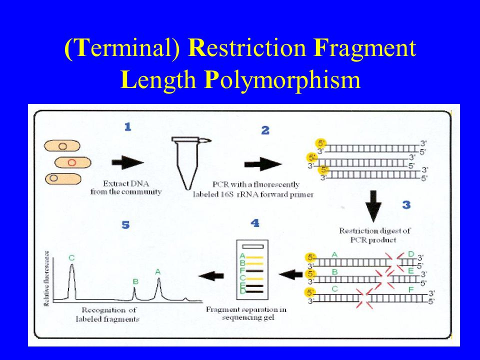 (Terminal) Restriction Fragment Length Polymorphism