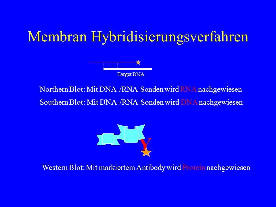 Membran Hybridisierungsverfahren