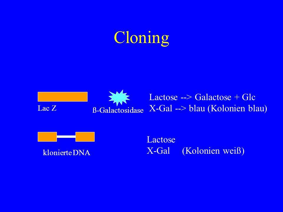 Cloning Lactose --> Galactose + Glc