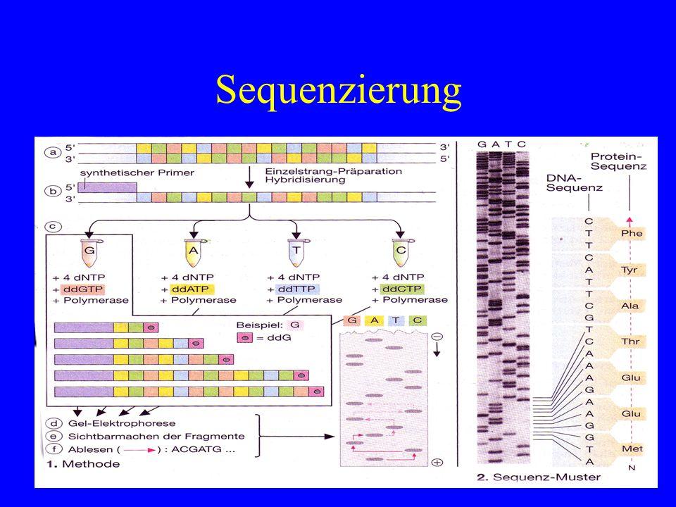 Sequenzierung