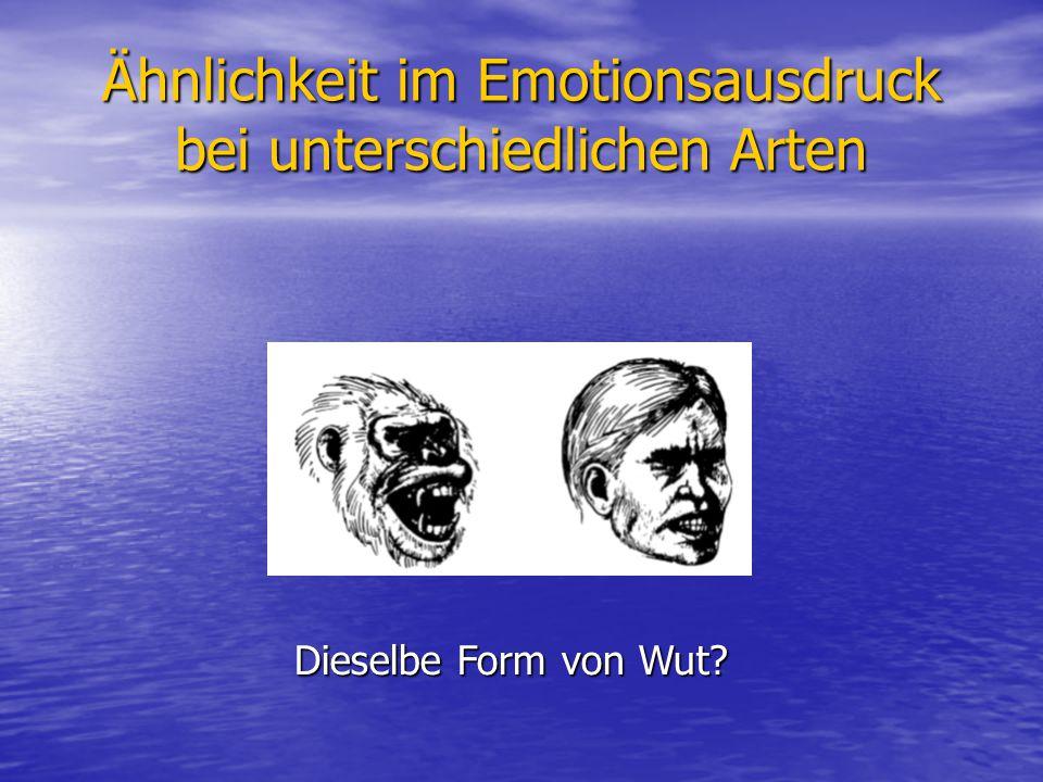 Ähnlichkeit im Emotionsausdruck bei unterschiedlichen Arten