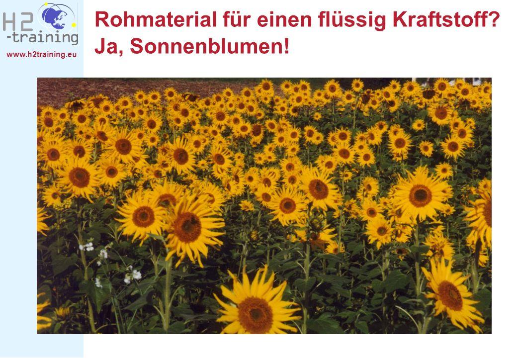 Rohmaterial für einen flüssig Kraftstoff Ja, Sonnenblumen!