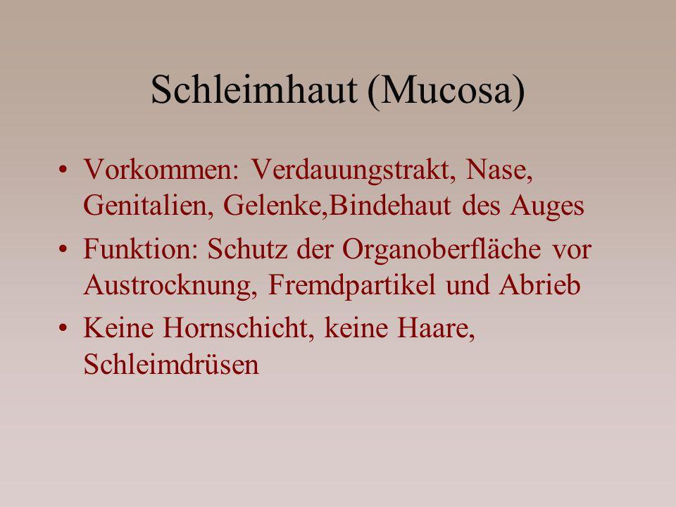 Schleimhaut (Mucosa) Vorkommen: Verdauungstrakt, Nase, Genitalien, Gelenke,Bindehaut des Auges.