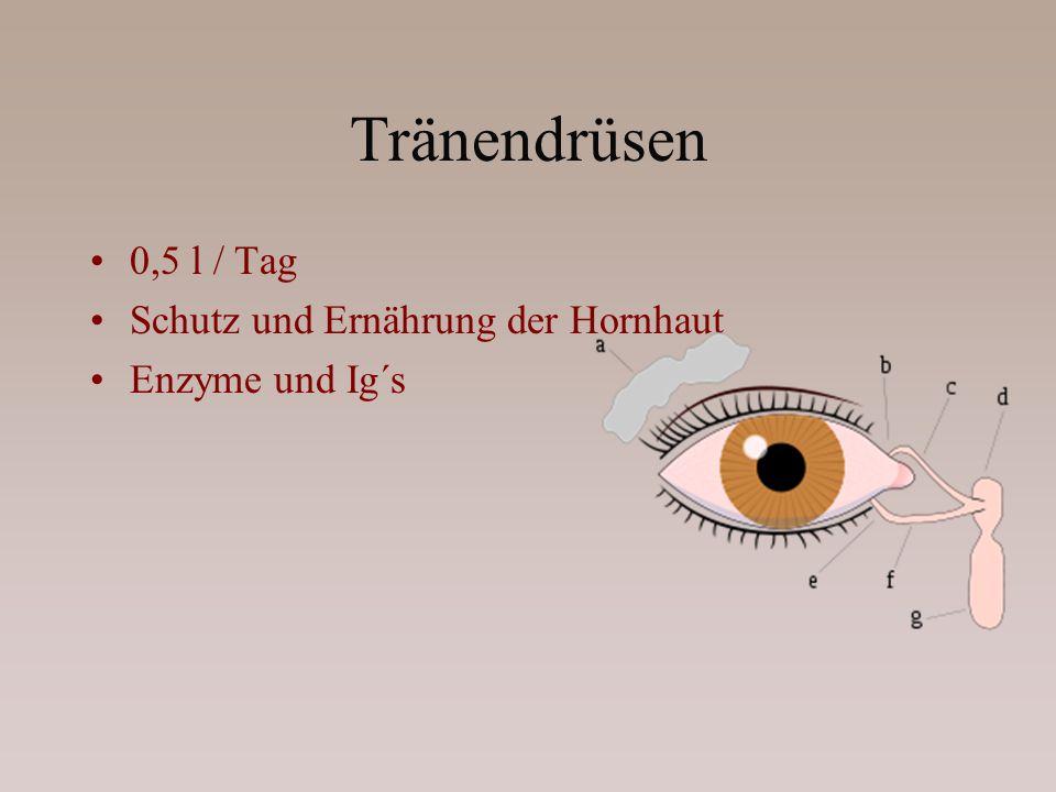 Tränendrüsen 0,5 l / Tag Schutz und Ernährung der Hornhaut