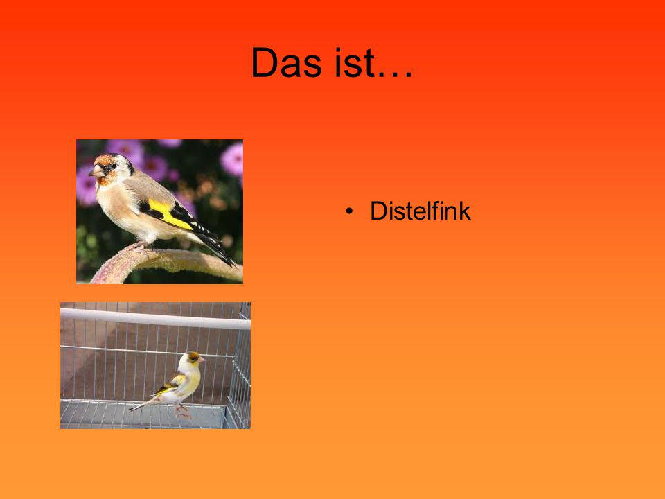 Das ist… Distelfink
