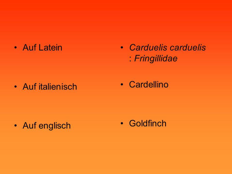 Auf Latein Auf italienisch Auf englisch Carduelis carduelis : Fringillidae Cardellino Goldfinch
