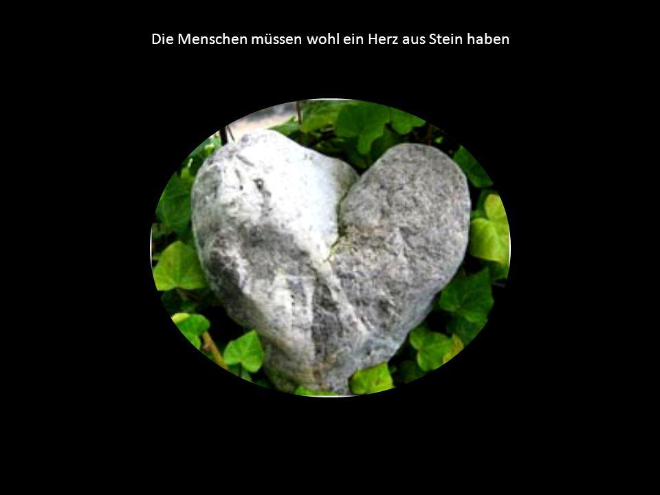 Die Menschen müssen wohl ein Herz aus Stein haben