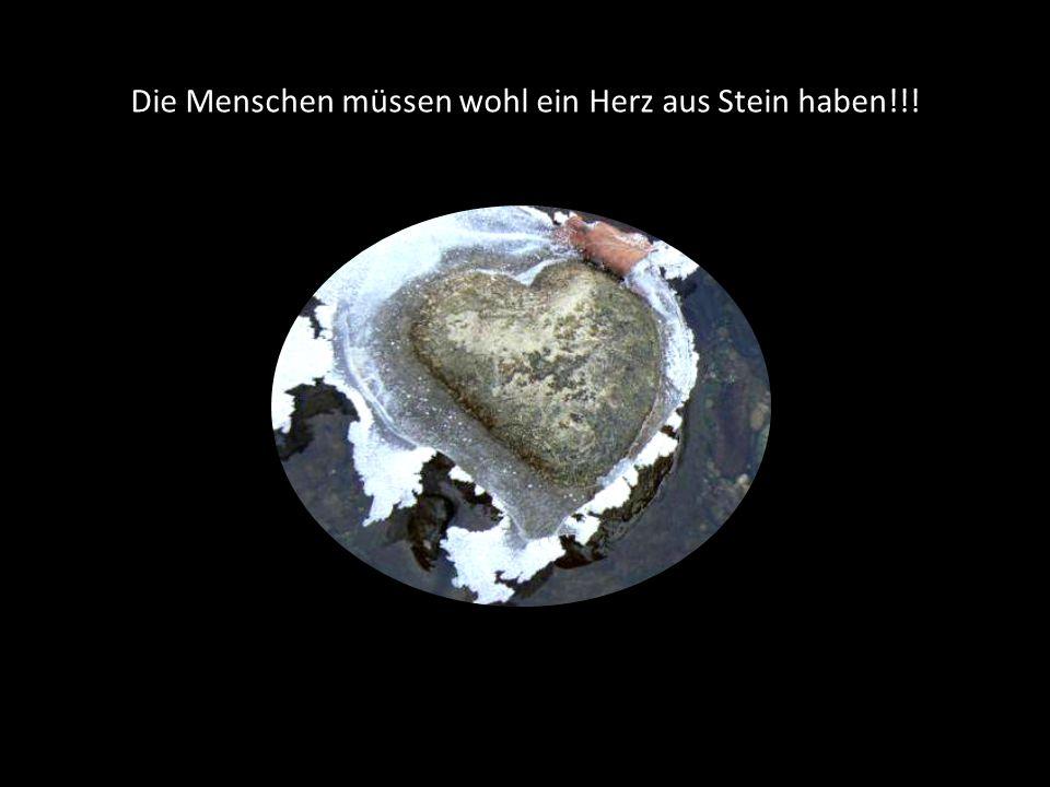 Die Menschen müssen wohl ein Herz aus Stein haben!!!