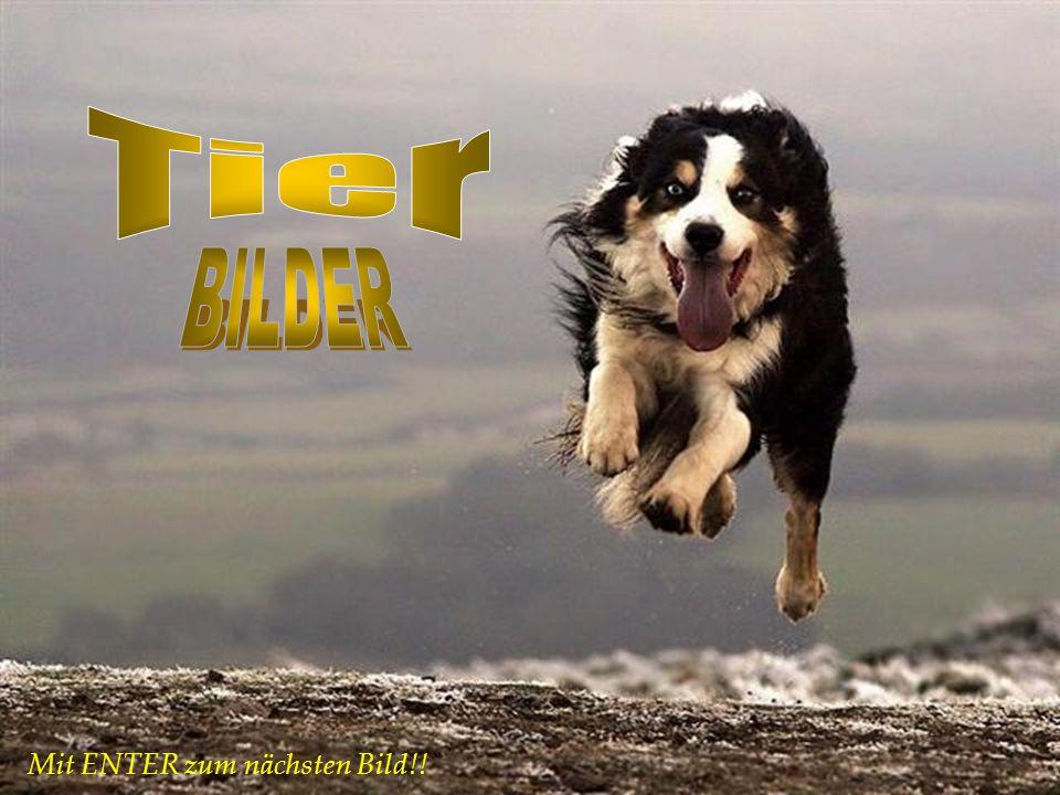 Tier BILDER Mit ENTER zum nächsten Bild!!