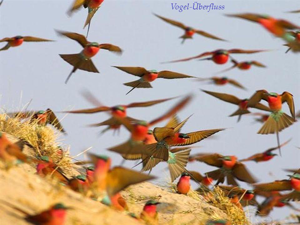 Vogel-Überfluss