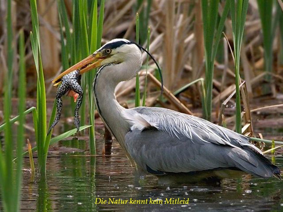Die Natur kennt kein Mitleid