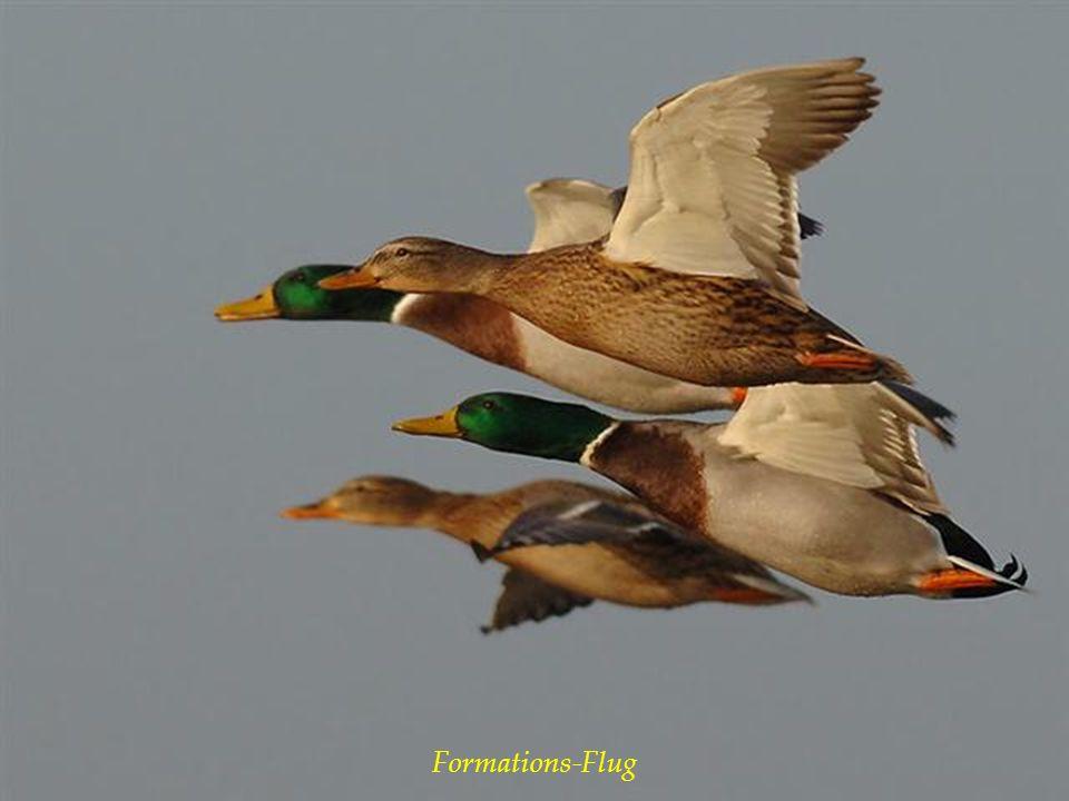 Formations-Flug