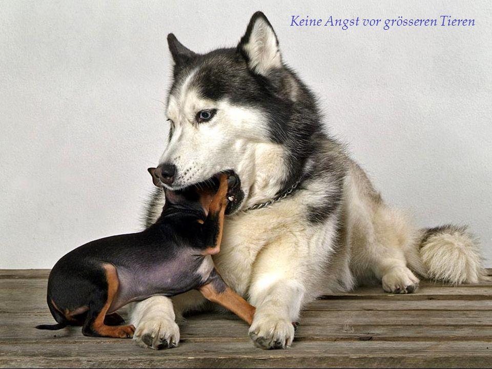 Keine Angst vor grösseren Tieren