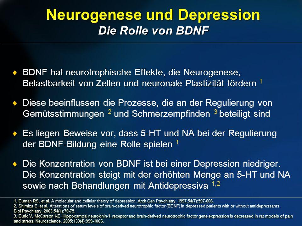 Neurogenese und Depression Die Rolle von BDNF