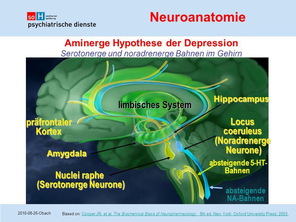 (Serotonerge Neurone) absteigende 5-HT-Bahnen absteigende NA-Bahnen