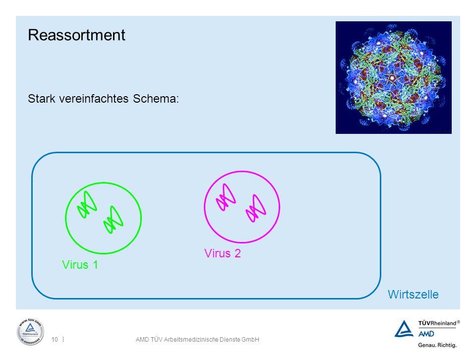 Reassortment Stark vereinfachtes Schema: Virus 2 Virus 1 Wirtszelle