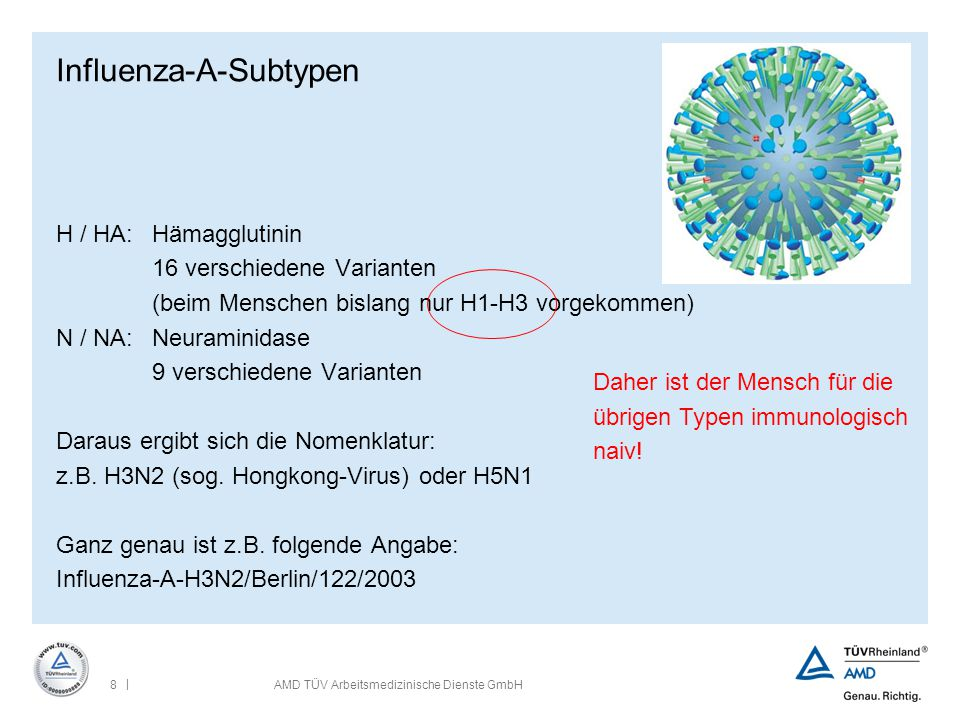 Influenza-A-Subtypen