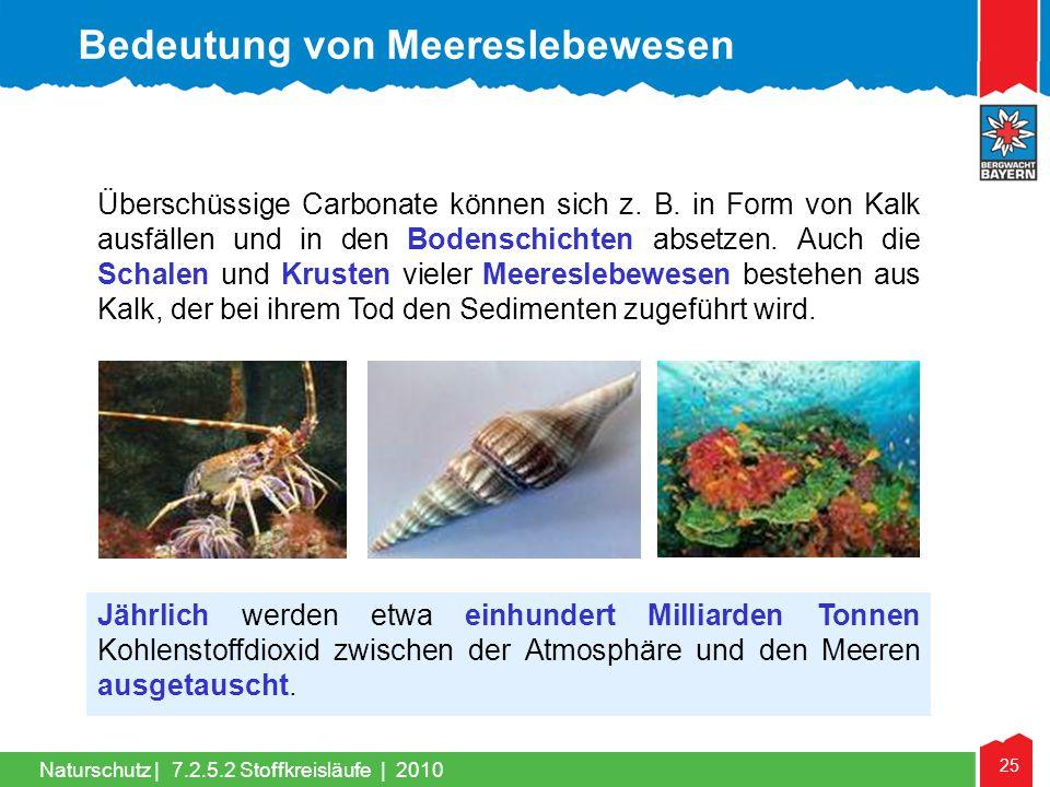 Bedeutung von Meereslebewesen