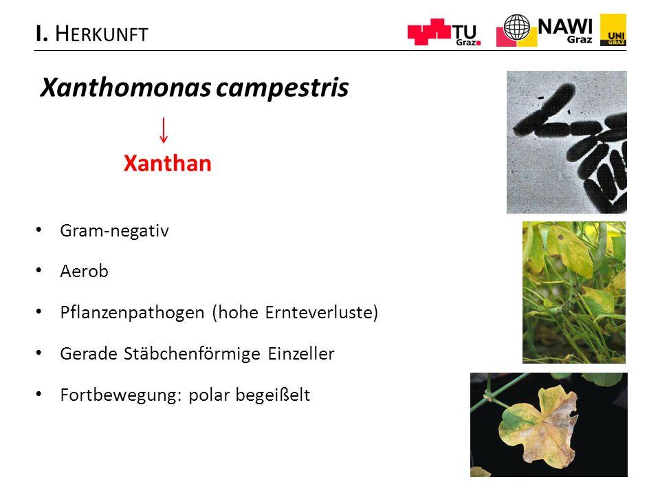 Xanthomonas campestris