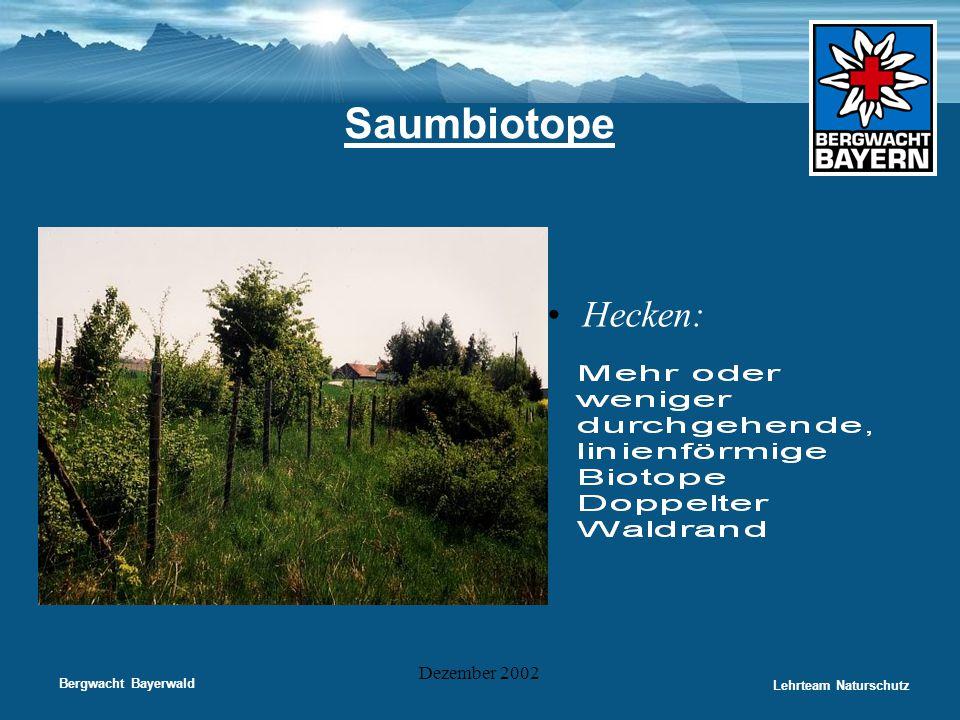 Saumbiotope Hecken: Dezember 2002