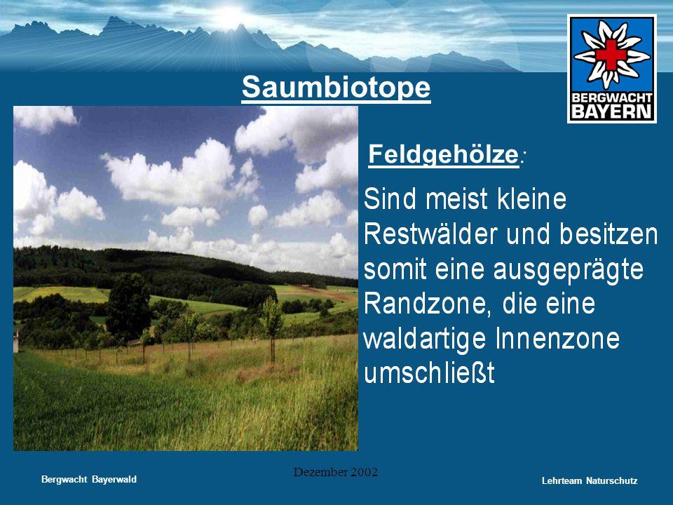 Saumbiotope Feldgehölze: Dezember 2002