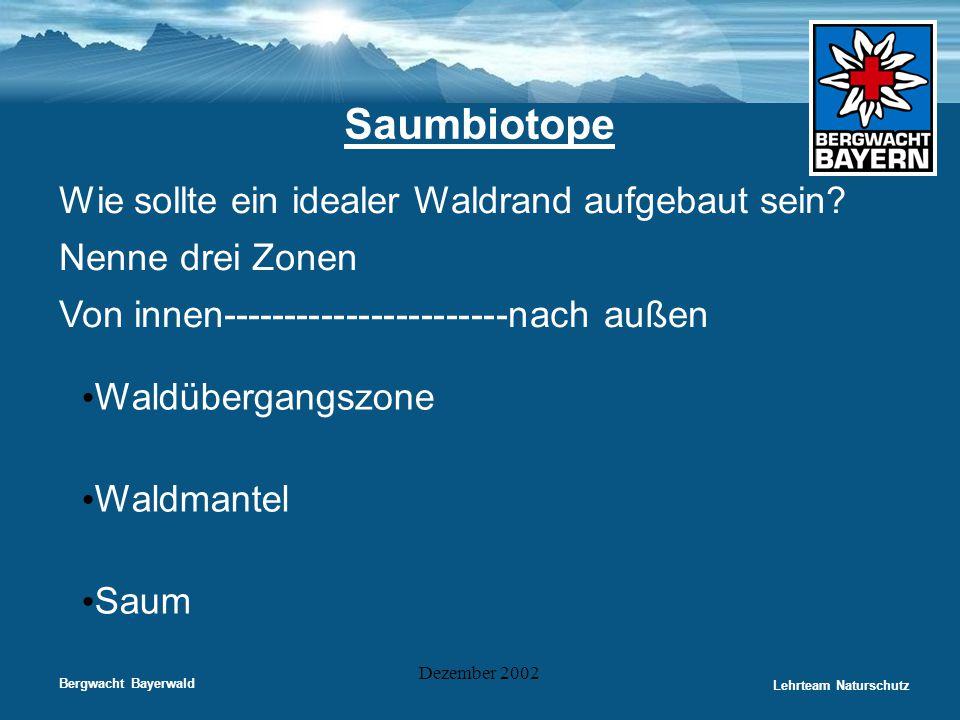 Saumbiotope Wie sollte ein idealer Waldrand aufgebaut sein