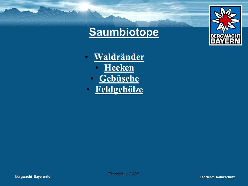 Saumbiotope Waldränder Hecken Gebüsche Feldgehölze Dezember 2002