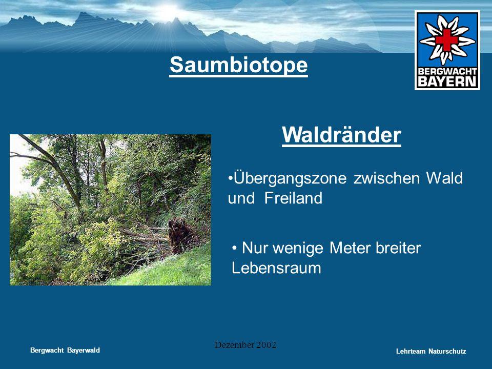 Saumbiotope Waldränder Übergangszone zwischen Wald und Freiland