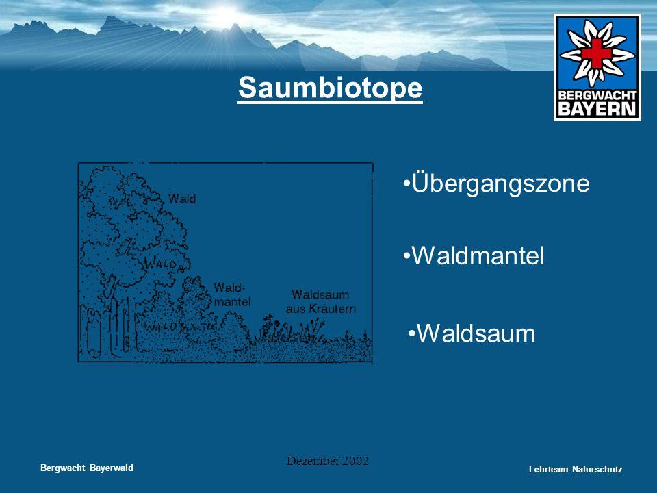 Saumbiotope Übergangszone Waldmantel Waldsaum Dezember 2002
