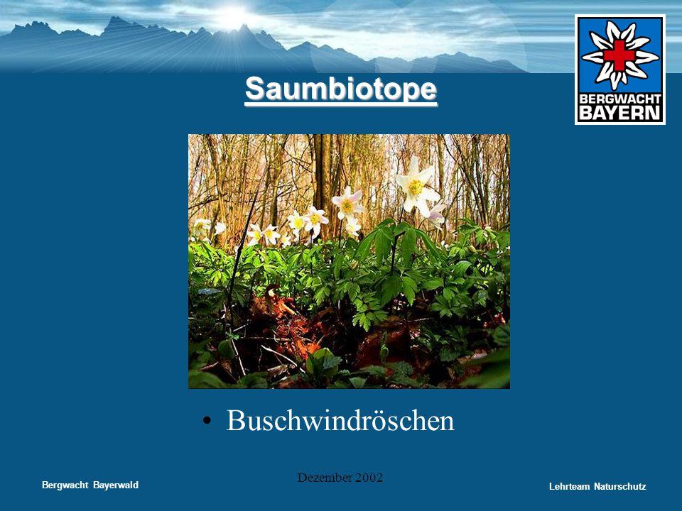 Saumbiotope Buschwindröschen Dezember 2002