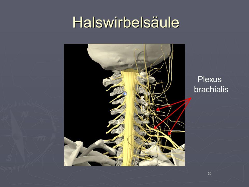 Halswirbelsäule Plexus brachialis 20