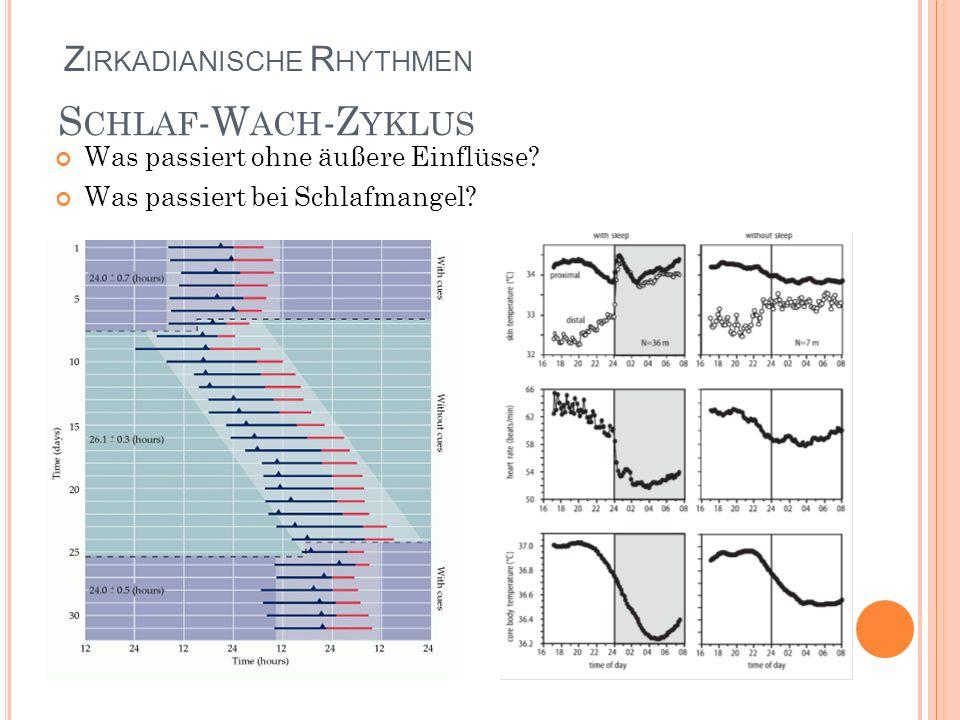 Schlaf-Wach-Zyklus Zirkadianische Rhythmen