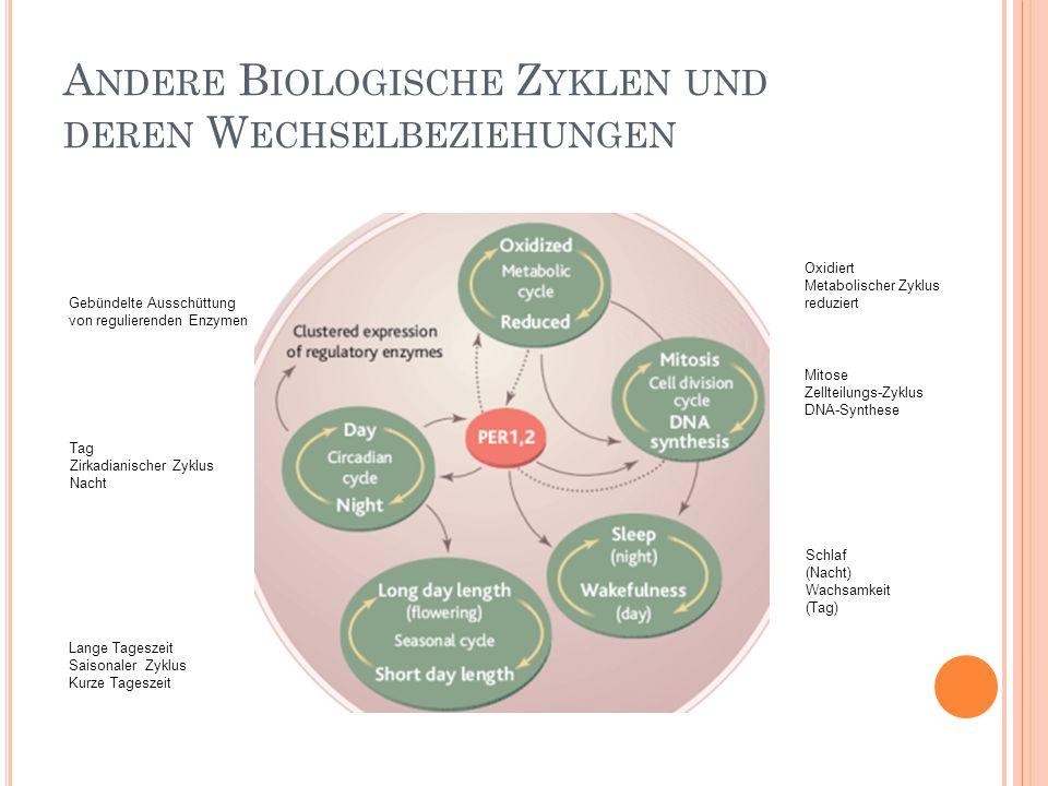 Andere Biologische Zyklen und deren Wechselbeziehungen